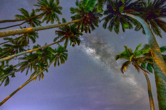 Palm Springs timeshare resorts offer stargazing under the palms